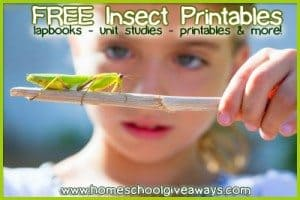 insect-printables