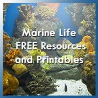 Marine Life Themed Free Resources and Printables!