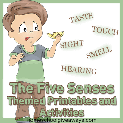 math worksheet : the five senses themed printables and freebies : 5 Senses Worksheet For Kindergarten