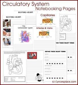 CA_CirculatoryNotebooking