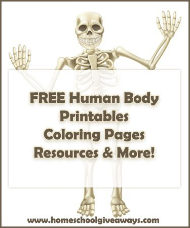 image relating to Free Printable Human Anatomy Coloring Pages identify Human Anatomy Freebies - Homeschool Giveaways