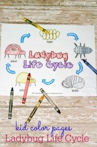 kid-color-pages-ladybug-life-cycles--682x1024