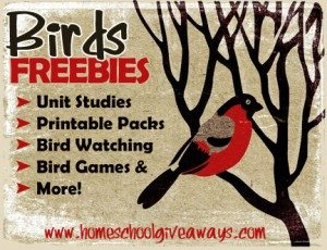 bird-freebies
