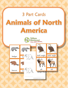 Animals-of-North-America-3-Part-Cards-231x300
