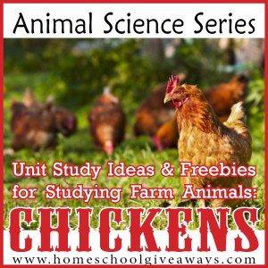 Chicken01