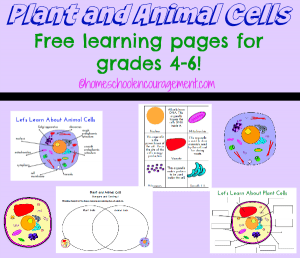 Plant-and-Animal-Cell-Learning-Pages
