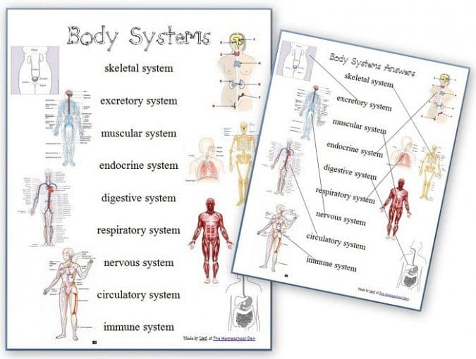 FREE Human Body Systems Worksheets - Homeschool Giveaways