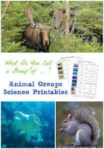 animalgroupstitle