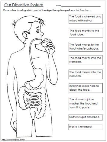 FREE Digestive System Worksheet www.homeschoolgiveaways.com FREE worksheet to teach your upper elementary students about the digestive system!