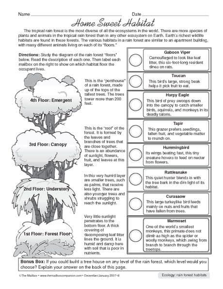 all worksheets forest habitat worksheets printable worksheets guide for children and parents. Black Bedroom Furniture Sets. Home Design Ideas