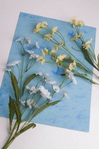 be-a-botanist-make-herbarium-sheets-slideshowmainimage