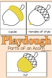 Playdough-Parts-of-an-Acorn-pin