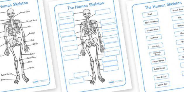 Free Human Skeleton Labeling Printables