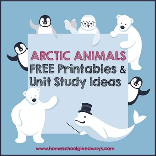 Arctic Animals Actvities For Kids