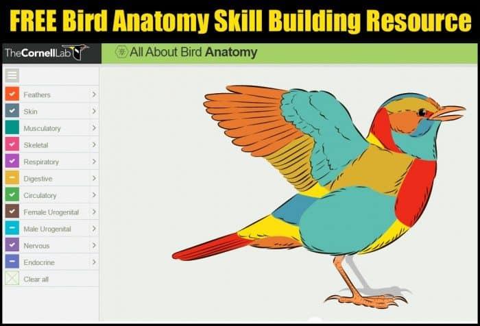 Free Bird Anatomy Skill Building Resource