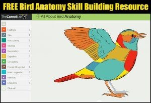 bird-anatomy