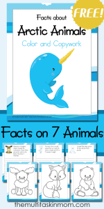 Color-and-Copy-Work-Facts-about-Arctic-Animals-includes-7-fun-animals-to-learn-about