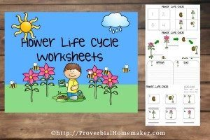 Flower-Life-Cycle-Worksheets