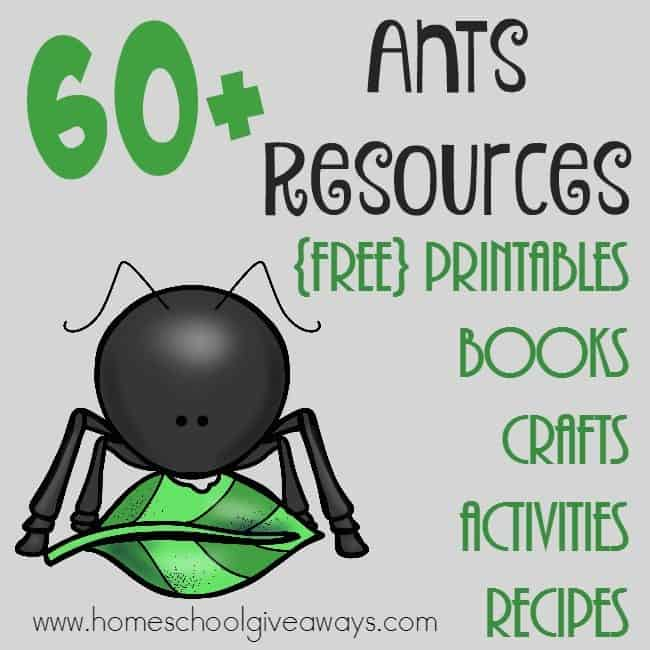 Whether you're studying insects or ants in particular, this BIG LIST of resources is sure to help you out!! Over 60 printables, crafts, books, recipes & more! :: www.homeschoolgiveaways.com