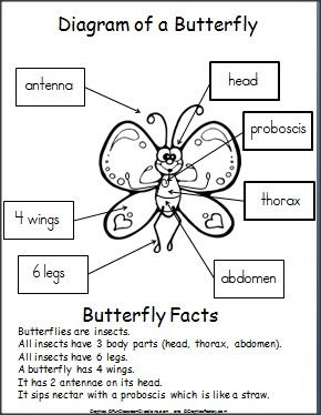 Butterfly on Honey Bee Life Cycle Chart