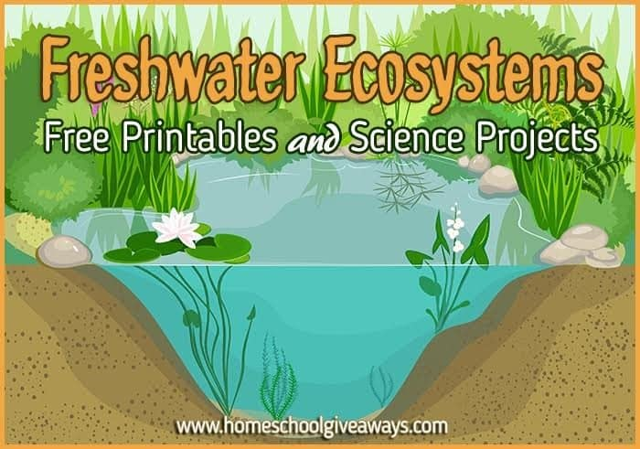 Freshwater Ecosystems: FREE Printables and Science Projects