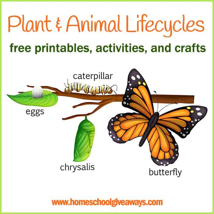 Plant and Animal Lifecycles: FREE Printables, Crafts and Activities