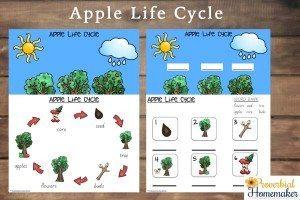 Apple-Life-Cycle-2