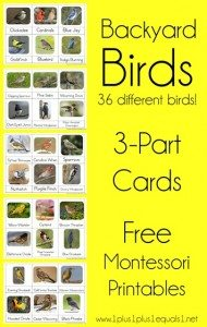 Backyard-Birds-Nomenclature-Printables