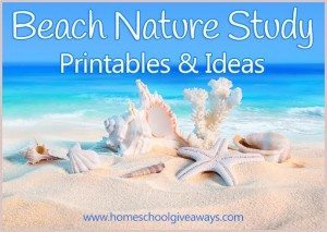 beachnaturestudy