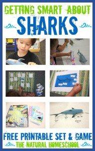 sharks-main
