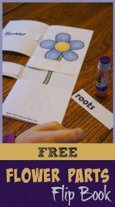 flowerpartsbook