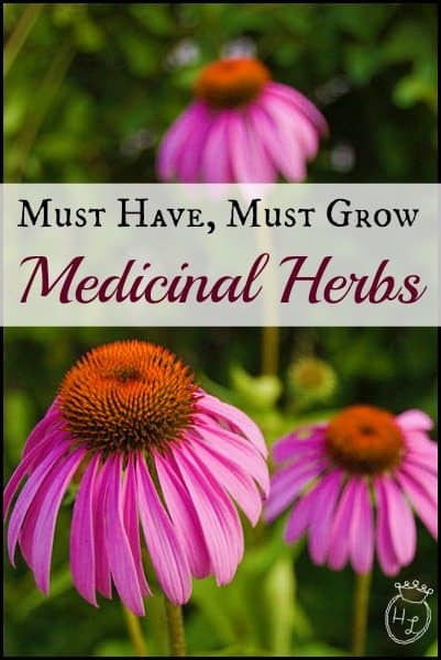 Must-Have-Must-Grow-Medicinal-Herbs-l-How-and-What-to-Grow-l-Homestead-Lady-.com_