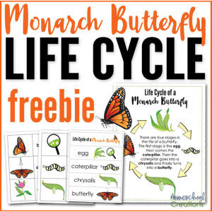 monarch-butterfly-life-cycle-free-printable-set-f