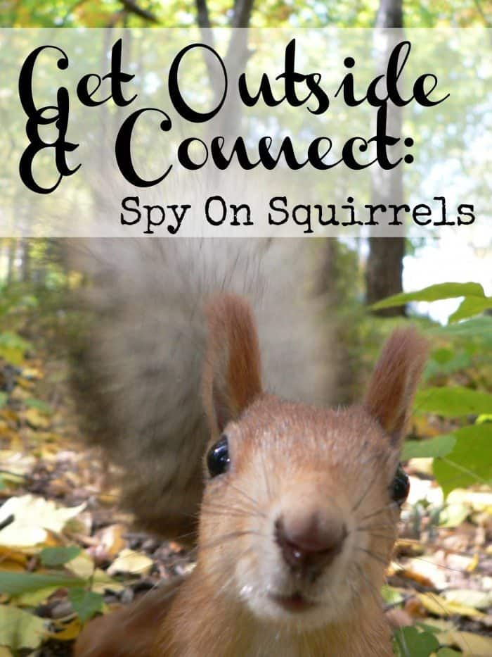 squirrel, muzzle sguirrel, funny animal, squirrel in the woods, bushy tail, black eyes
