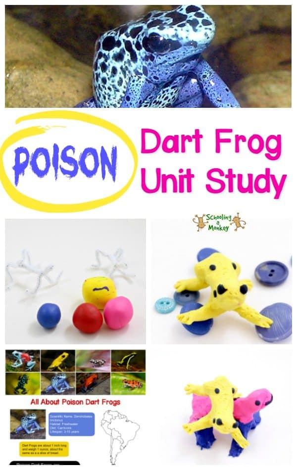poison-dart-frog-unit-study-pin