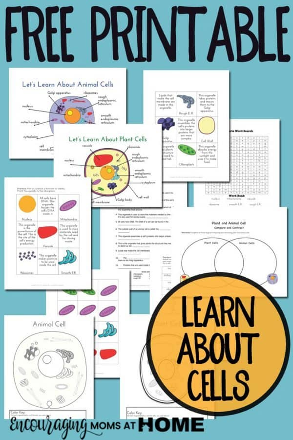 FREE Printable Plant and Animal Cell Pack - Homeschool ...