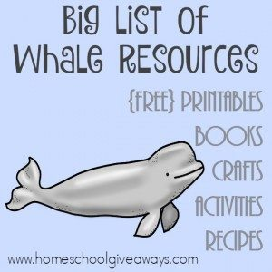 If you're studying whales or marine life this year, this BIG list of whale resources is perfect! :: www.homeschoolgiveaways.com
