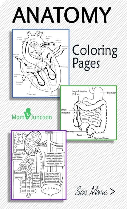 It is a photo of Fabulous Anatomical Coloring Pages