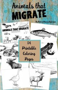 animals-that-migrate-coloring-pages
