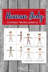 human-body-system-worksheets-for-kids