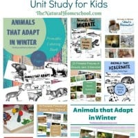 Animals-in-Winter-Hibernation-Migration-and-Adaptation-Unit-Study-for-Kids1
