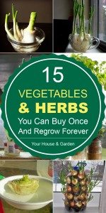 15-Vegetables-And-Herbs-You-Can-Buy-Once-And-Regrow-Forever