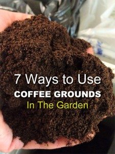 7-Ways-to-Use-Coffee-Grounds-in-the-Garden