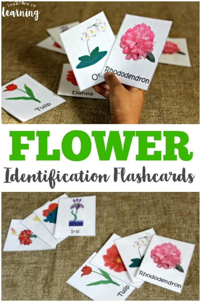 These-free-flower-identification-cards-are-great-for-little-budding-gardeners-or-for-an-outdoor-nature-walk