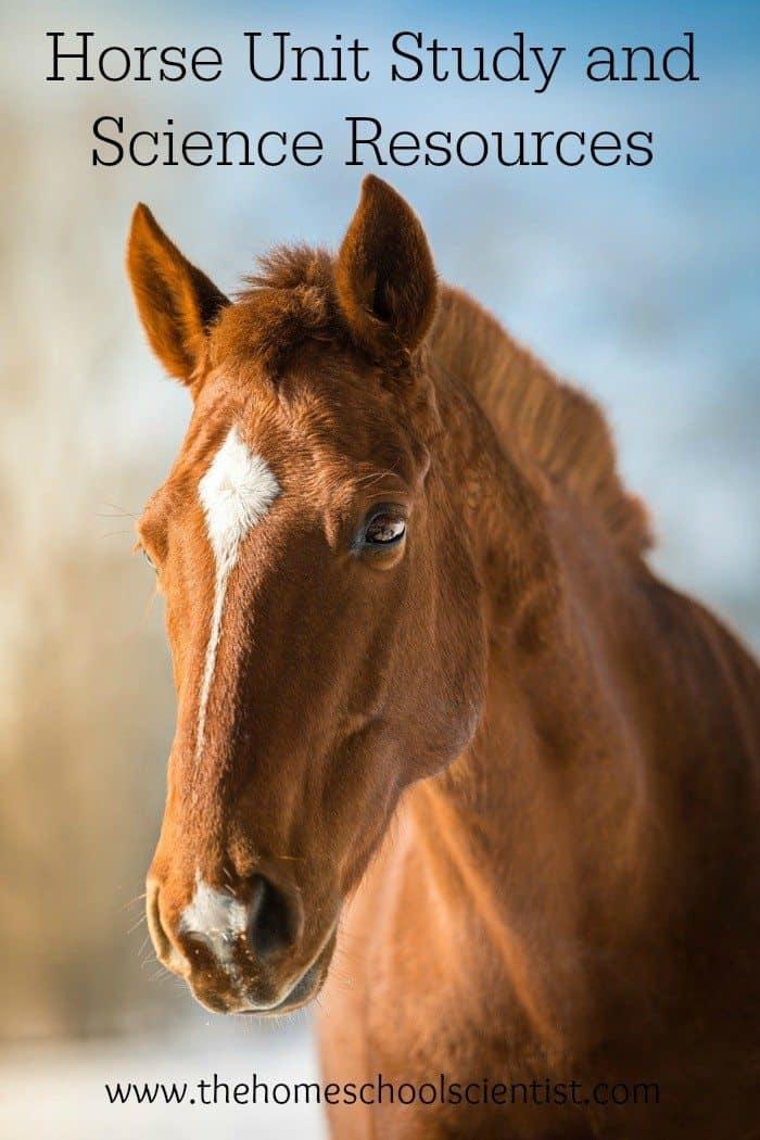 horse-unit-study-image