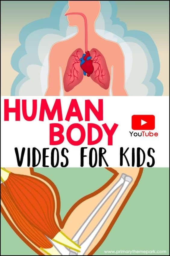humanbodyvideo