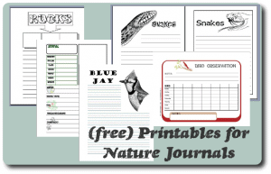 nature-notebook-printables