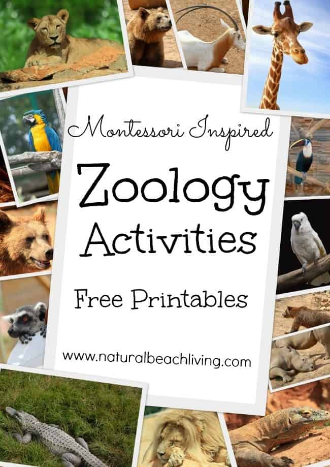 free montessori inspired zoology printables body coverings. Black Bedroom Furniture Sets. Home Design Ideas