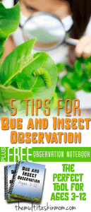 5-tips-for-Bug-and-Insect-Observation-Plus-a-Freebie