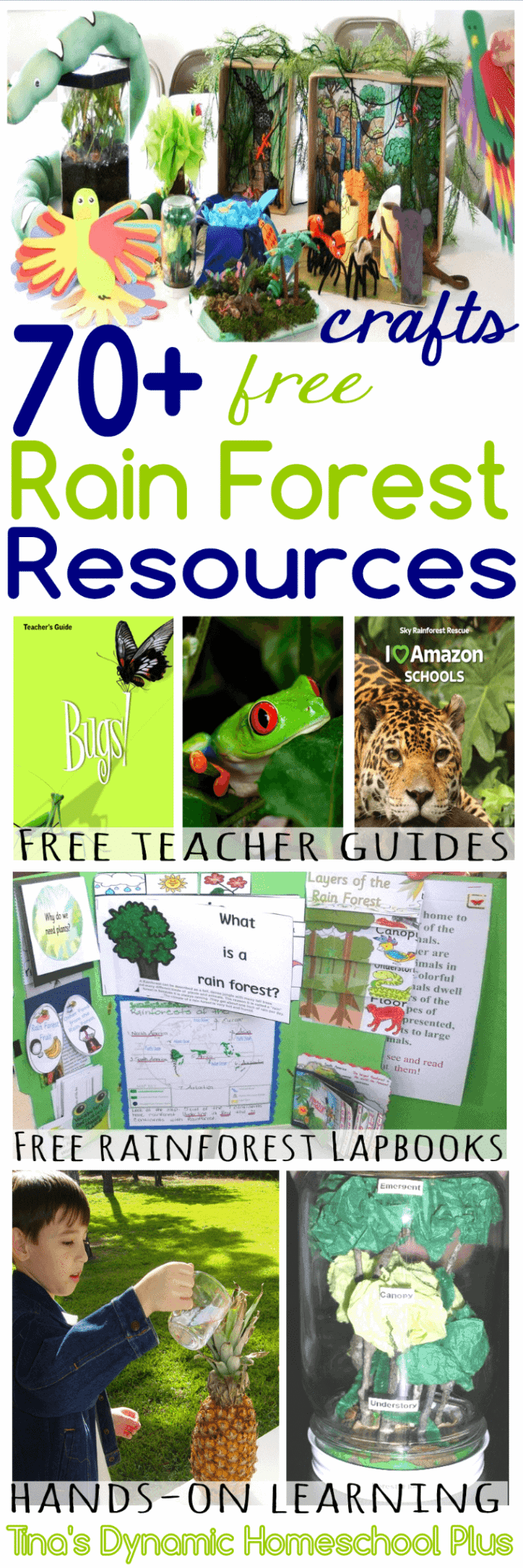 70-Free-Rain-Forest-Resources